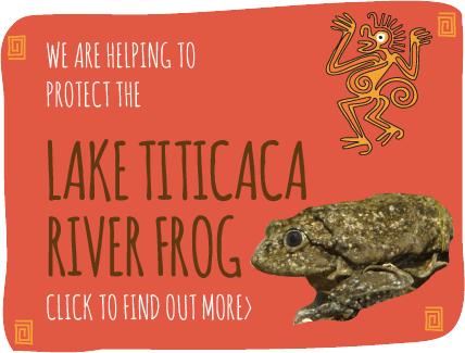 Lake Titicaca River Frog